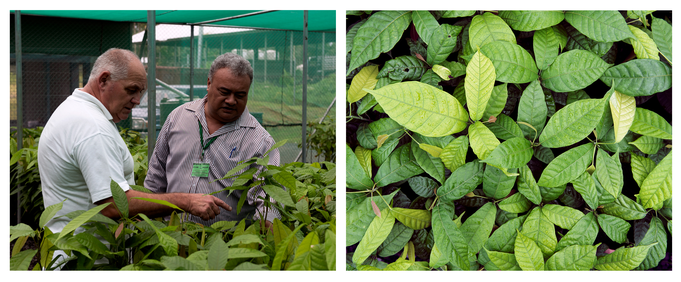 STEC CEO Patea Loli Malo Setefano & Dr. Nick Roskruge from Massey University inspect seedlings