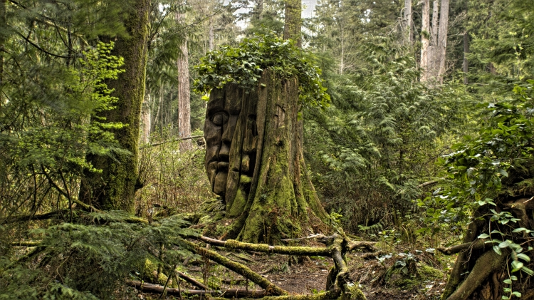 ~~~~The Forest Sentinel~~~~
