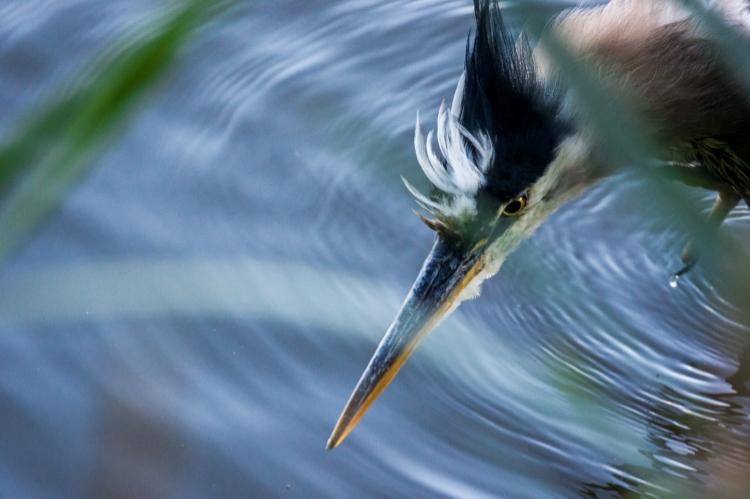 ~~~~Heron~~~~