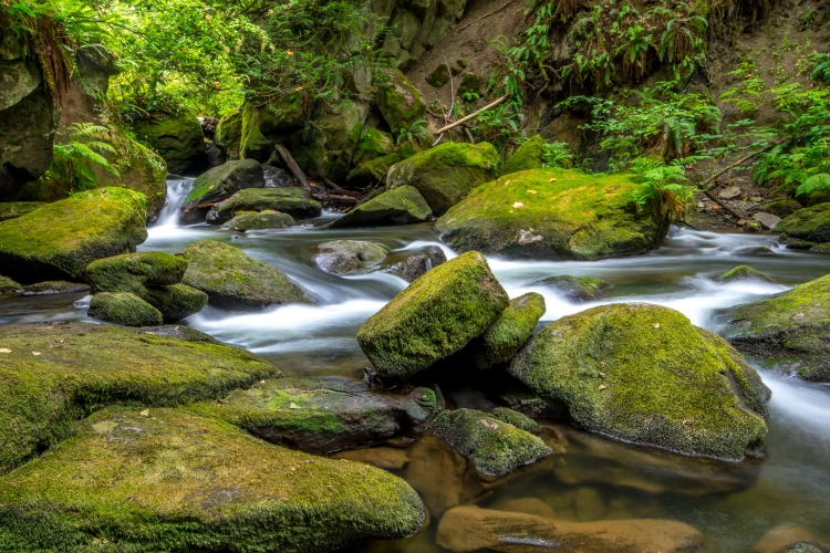 ~~~~Whatcom Creek~~~~