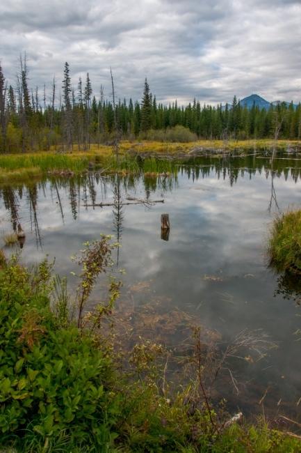 ~~~~Kicking Horse Pond~~~~