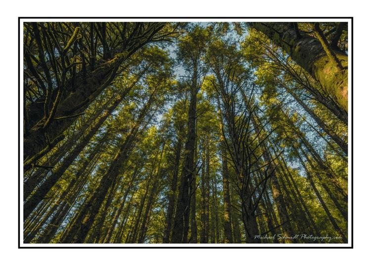 2013-10-26 Oregon Cannon Beach Ecola Forest-6