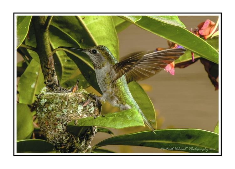 the hummingbird WB_resize.jpg