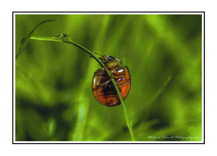 2013-010-03 Vancouver Stanley Park Ladybug-9