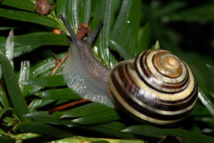 2014-06-30 Vancouver West End Snails-3