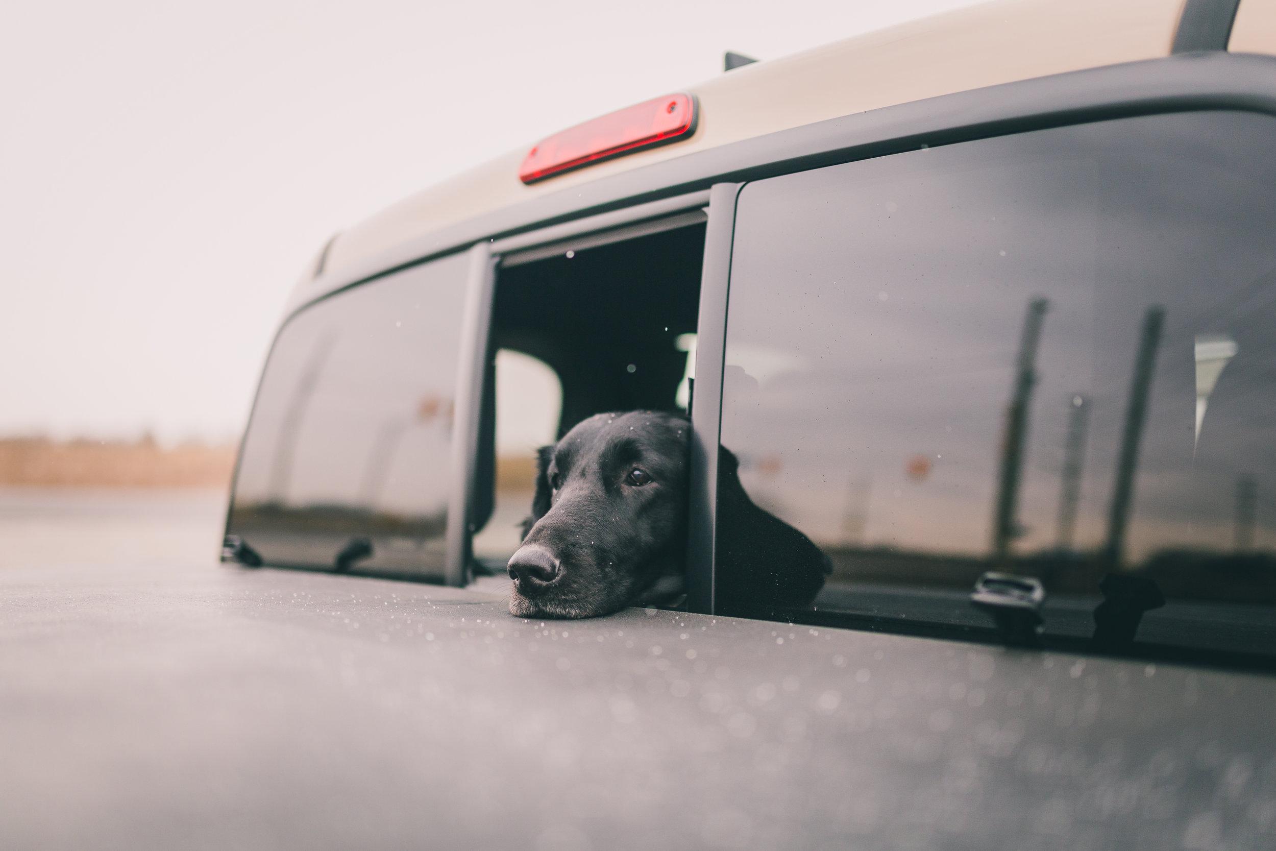 dogwindow.jpg