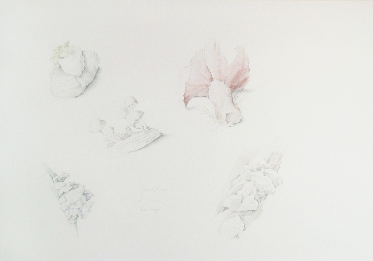 GOOD THINGS: FIVE FUNGI, 1972, Graphite and Watercolor on Paper, 11 x 16""