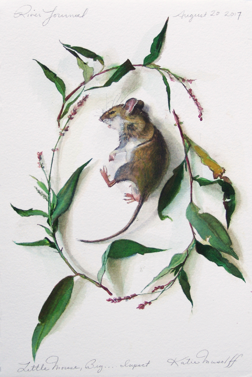"""Katie Musolff, Little Mouse, Big Impact, Watercolor on Paper,13.5x9"""" image, 19x14"""" framed"""