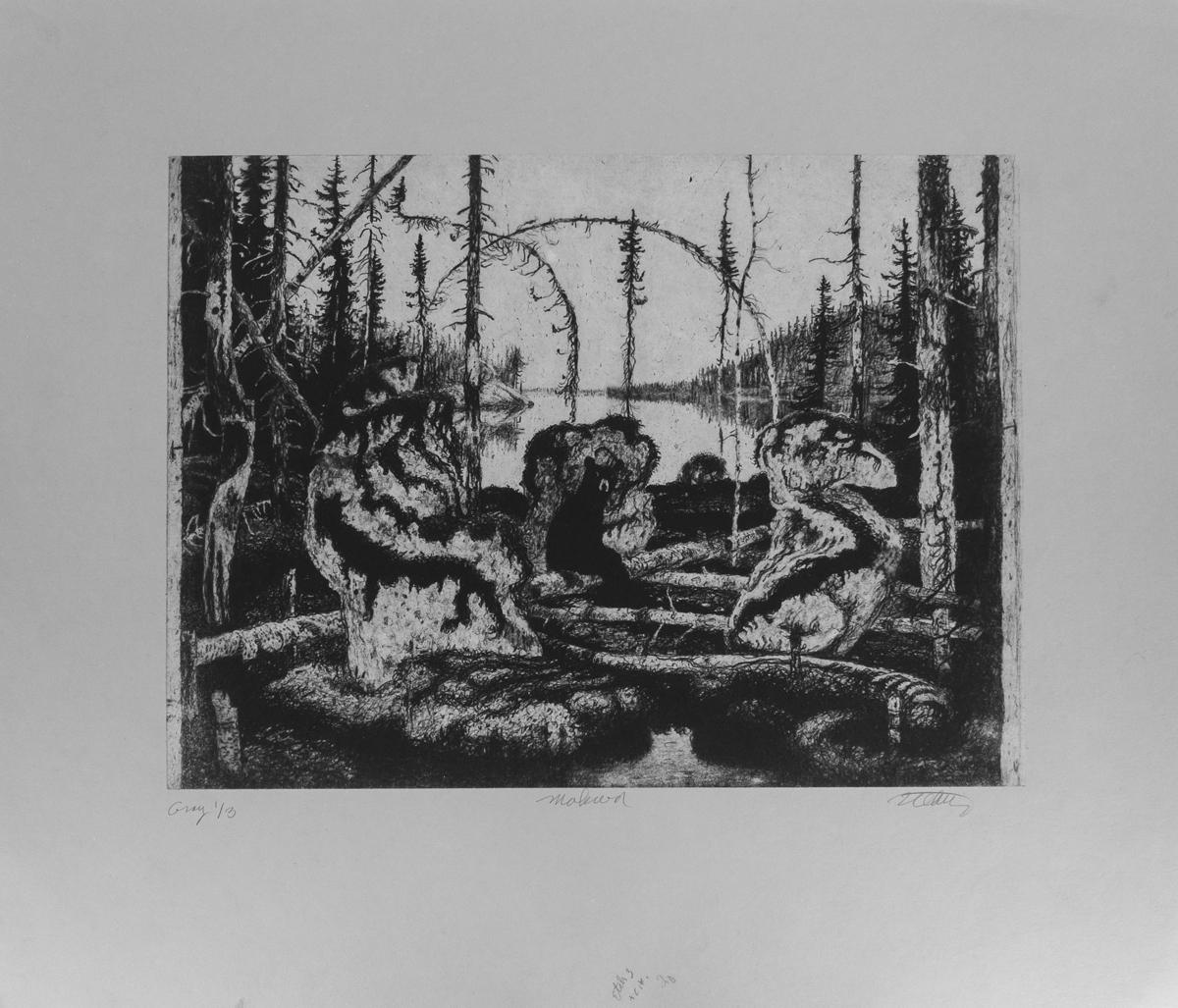 "MAKWA Grey, Ed. 1/3, Etching, image 11 3/4 x 16"" paper 19 x 22"""