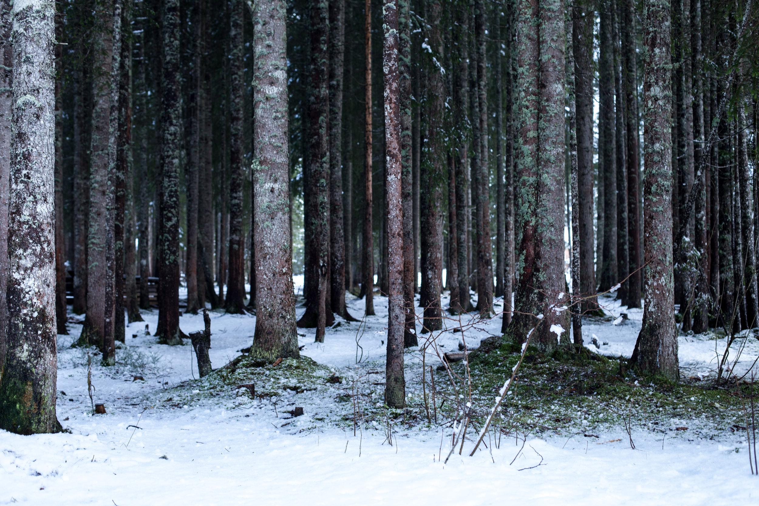 Lauenensee-9413.jpg