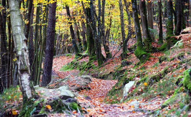 Woodland-walk-around-Lac-de.jpg