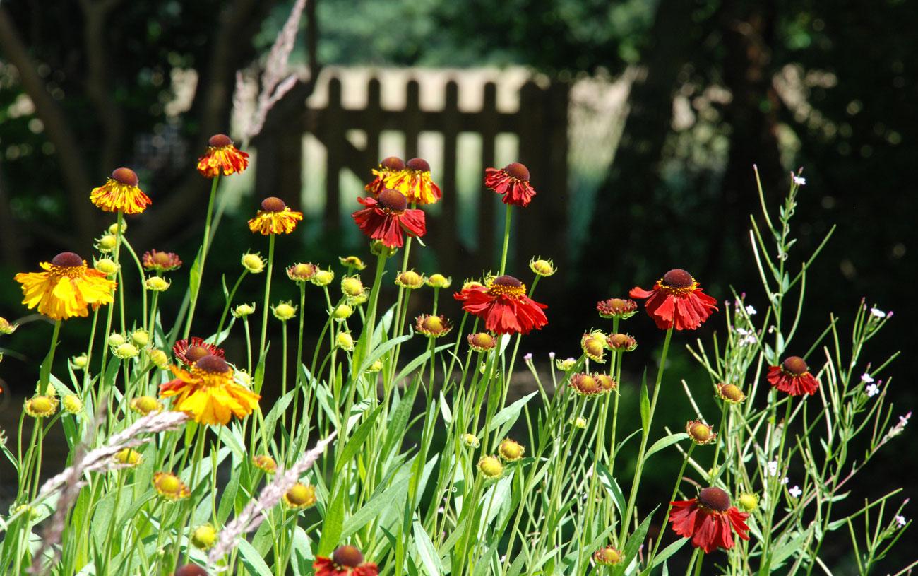 Informal garden with vibrant planting