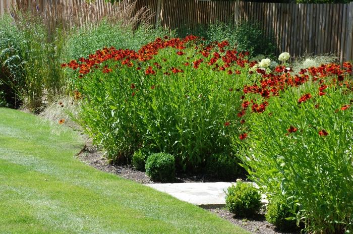 Helenium-and-grasses-Lisa-C.jpg