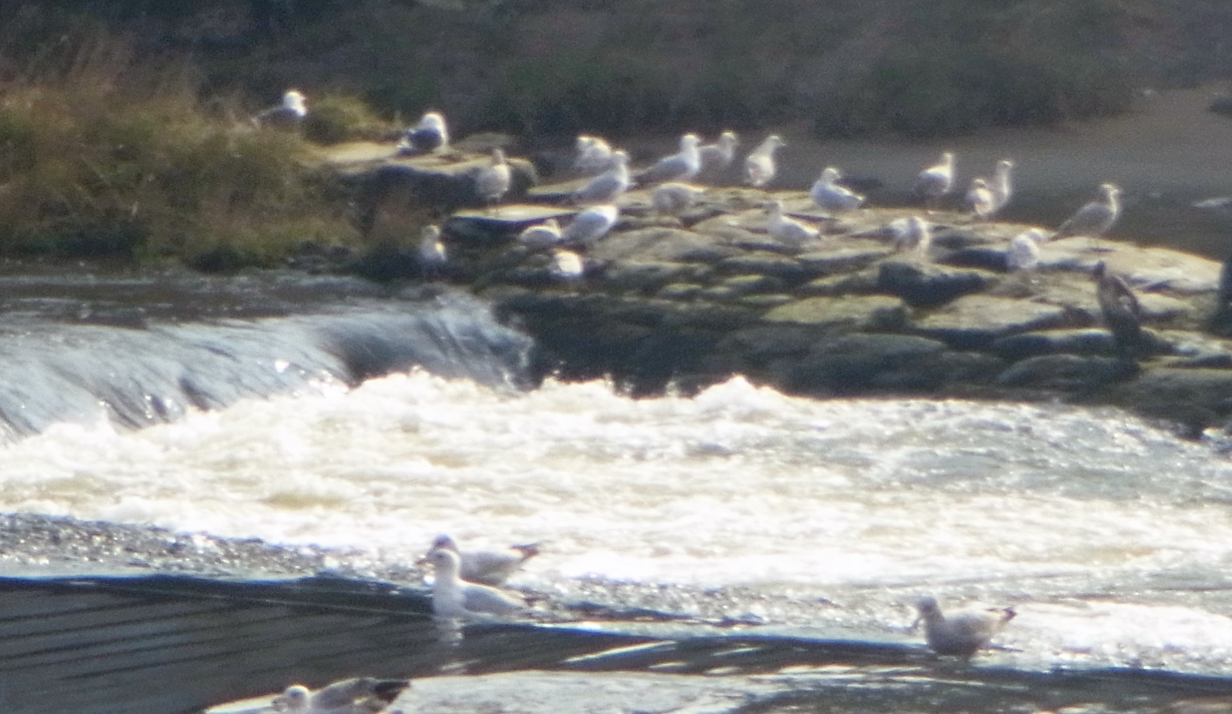 Gathering on the River Dee