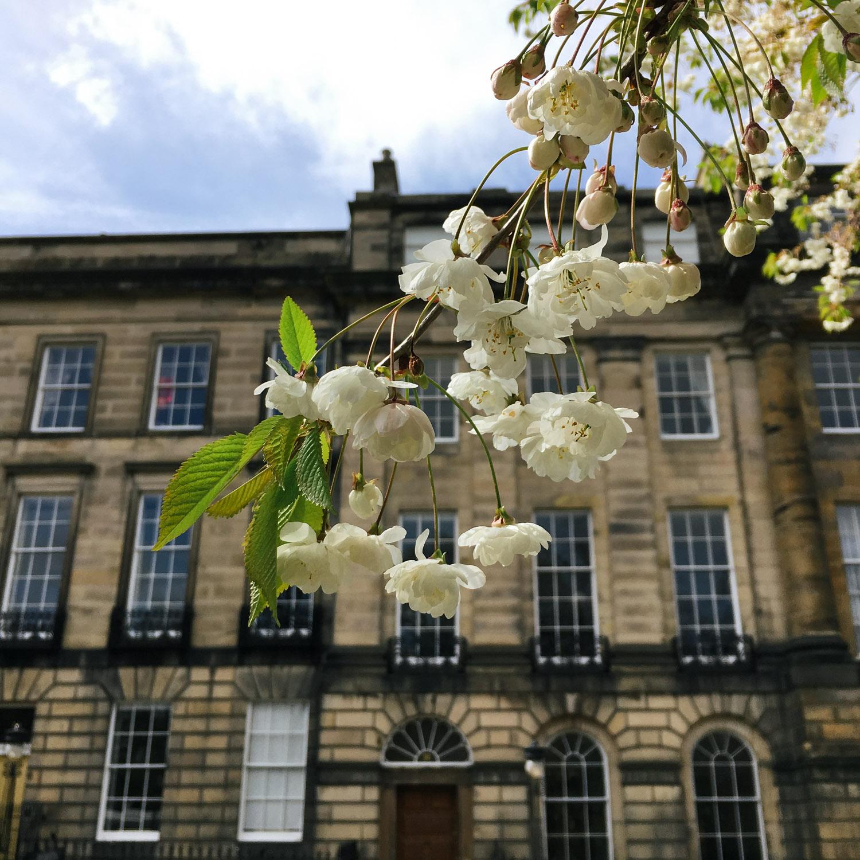 Edinburgh city spring sunshine_05.jpg
