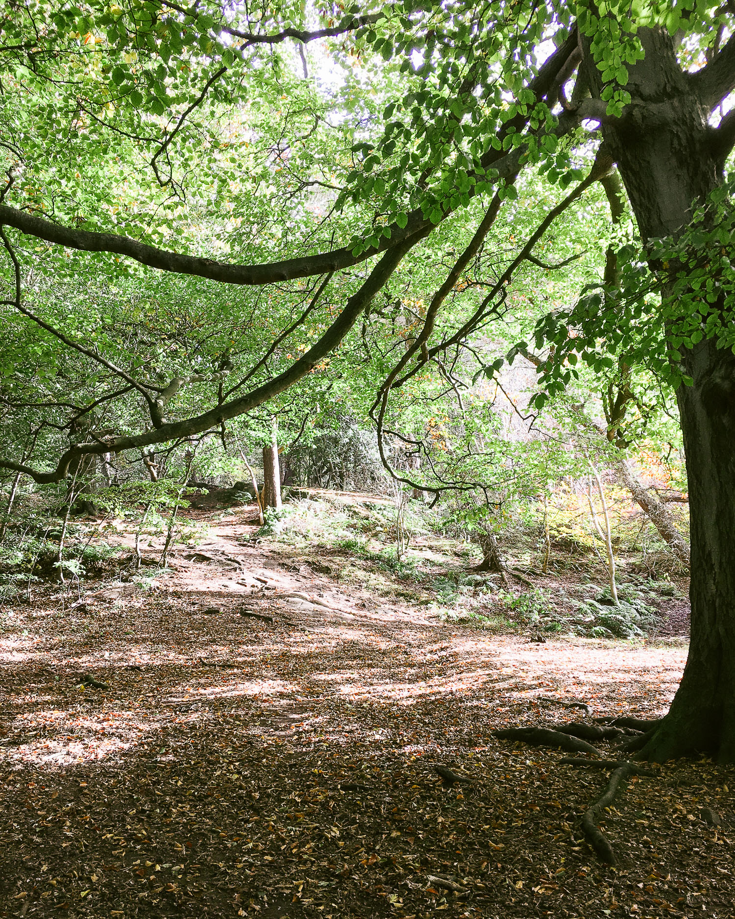 The forest at Costorphine Hill nature reserve