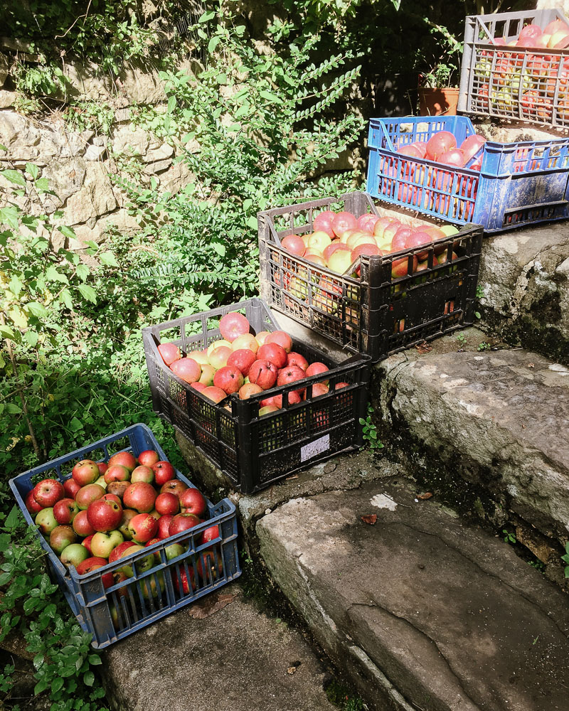 My neighbour's apple harvest in an Italian village