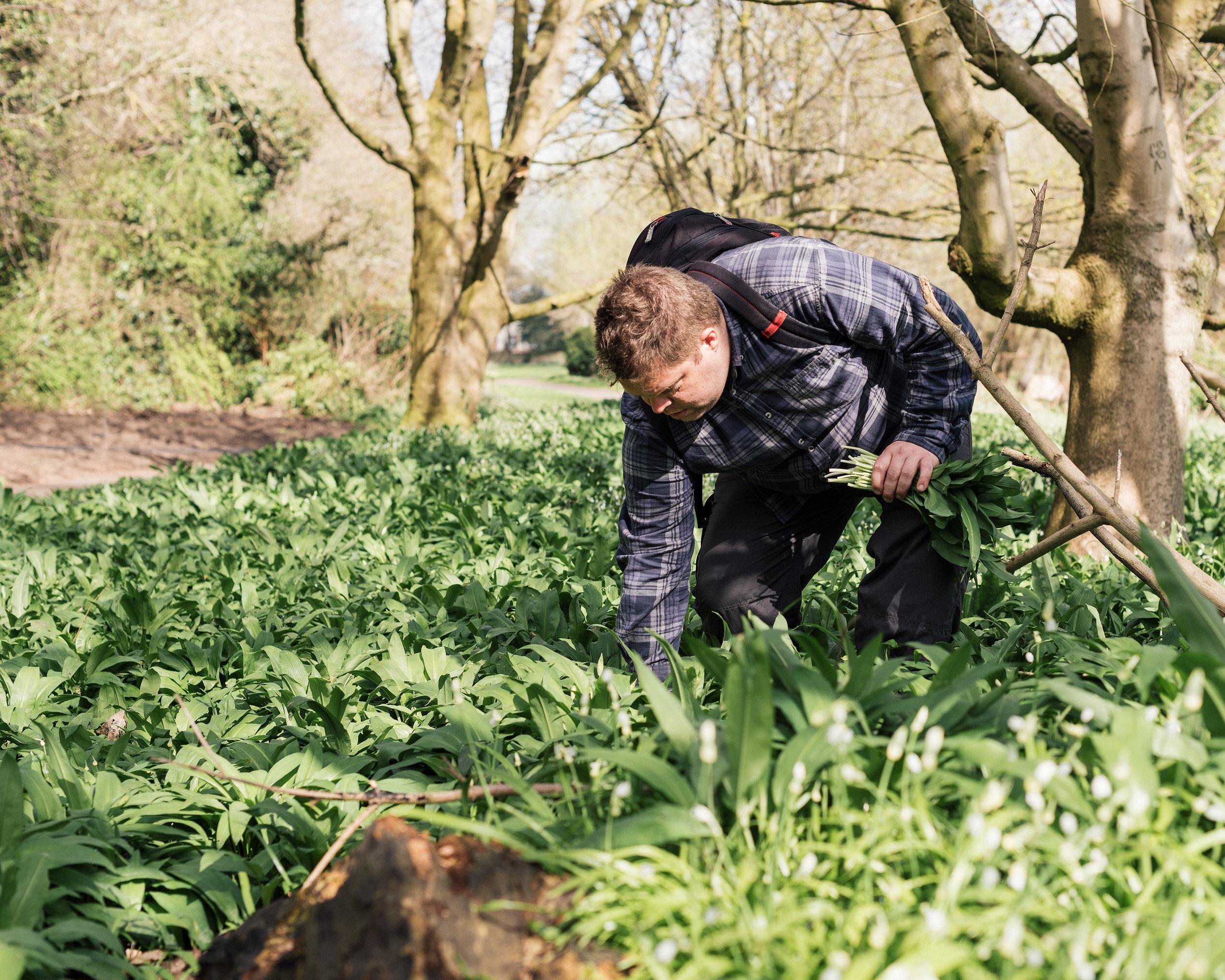 Rupert Waites foraging wild garlic