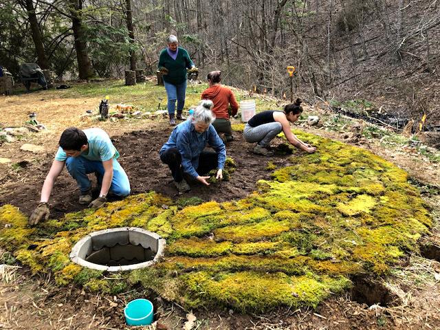 patchwork moss.jpg