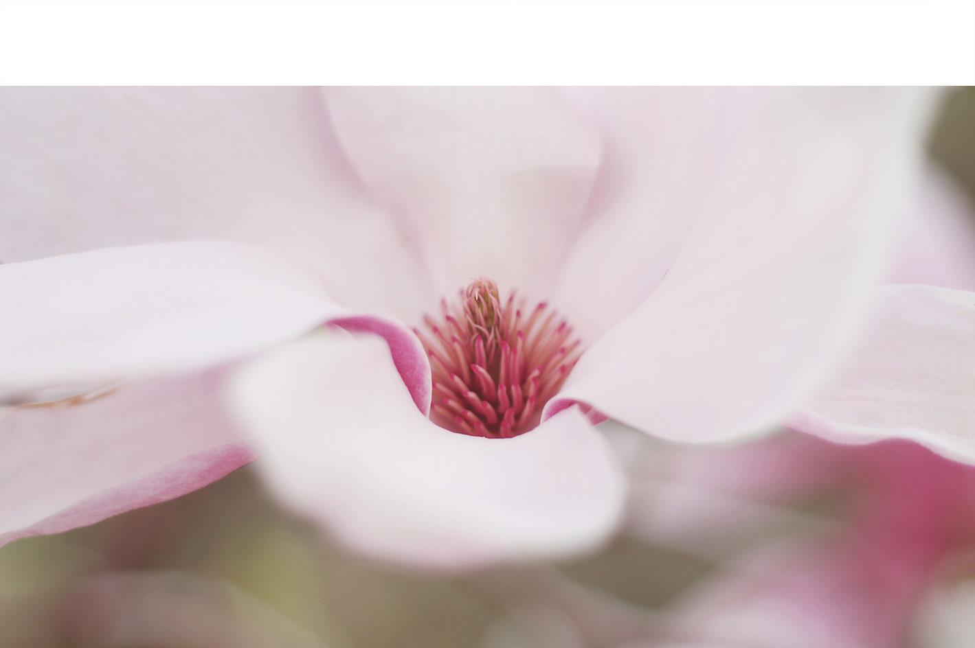 Nature-3.jpg