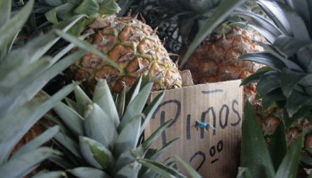 Some beautiful local pineapples at a farmers market in the mountains of Panama.
