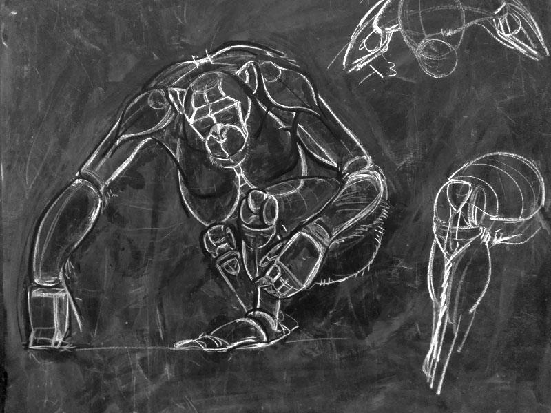 Anatomy drawing - Chimpanzee