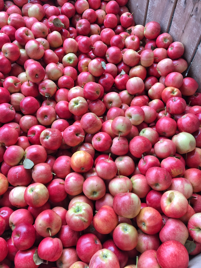 The abundance of delicious apples this time of year