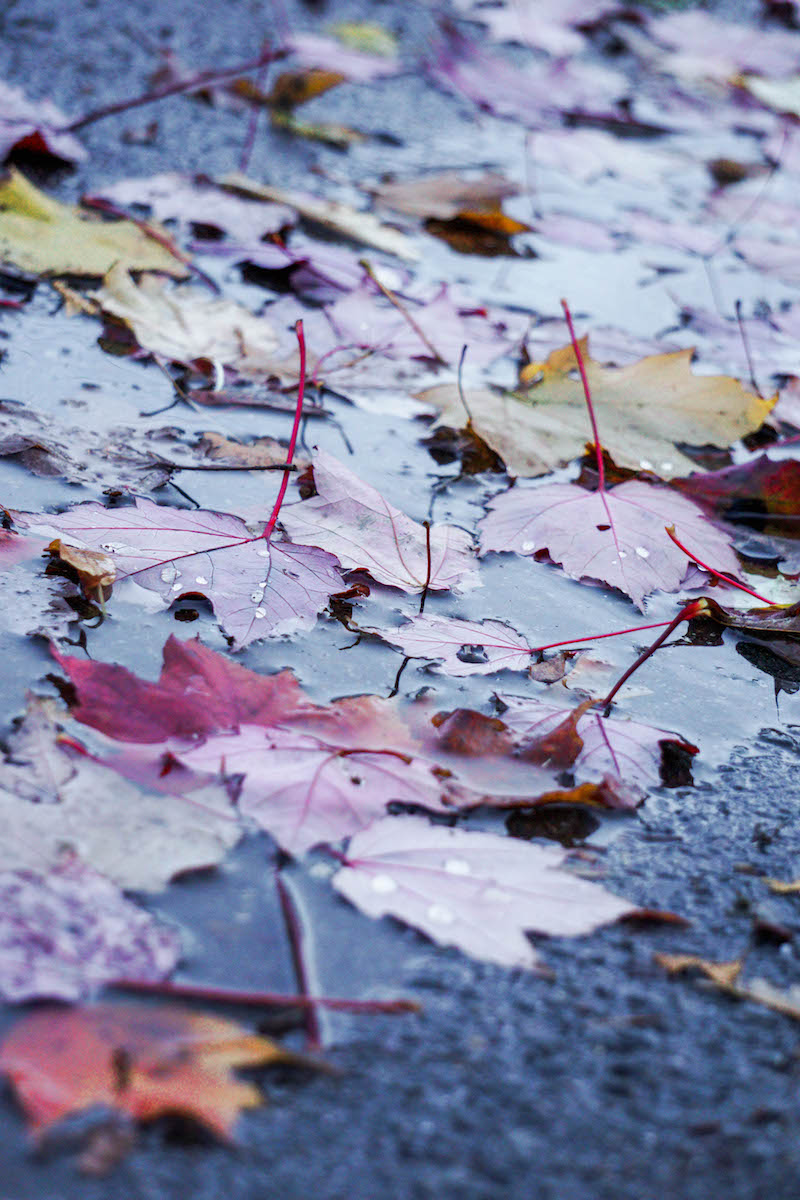 Dreary days that make the leaves look even more vibrant and beautiful
