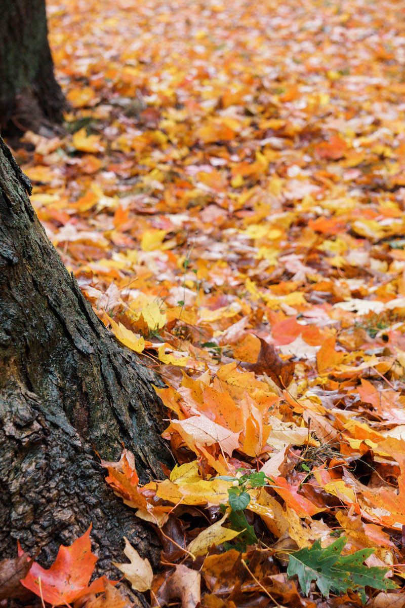 The sound the leaves make underneath your feet