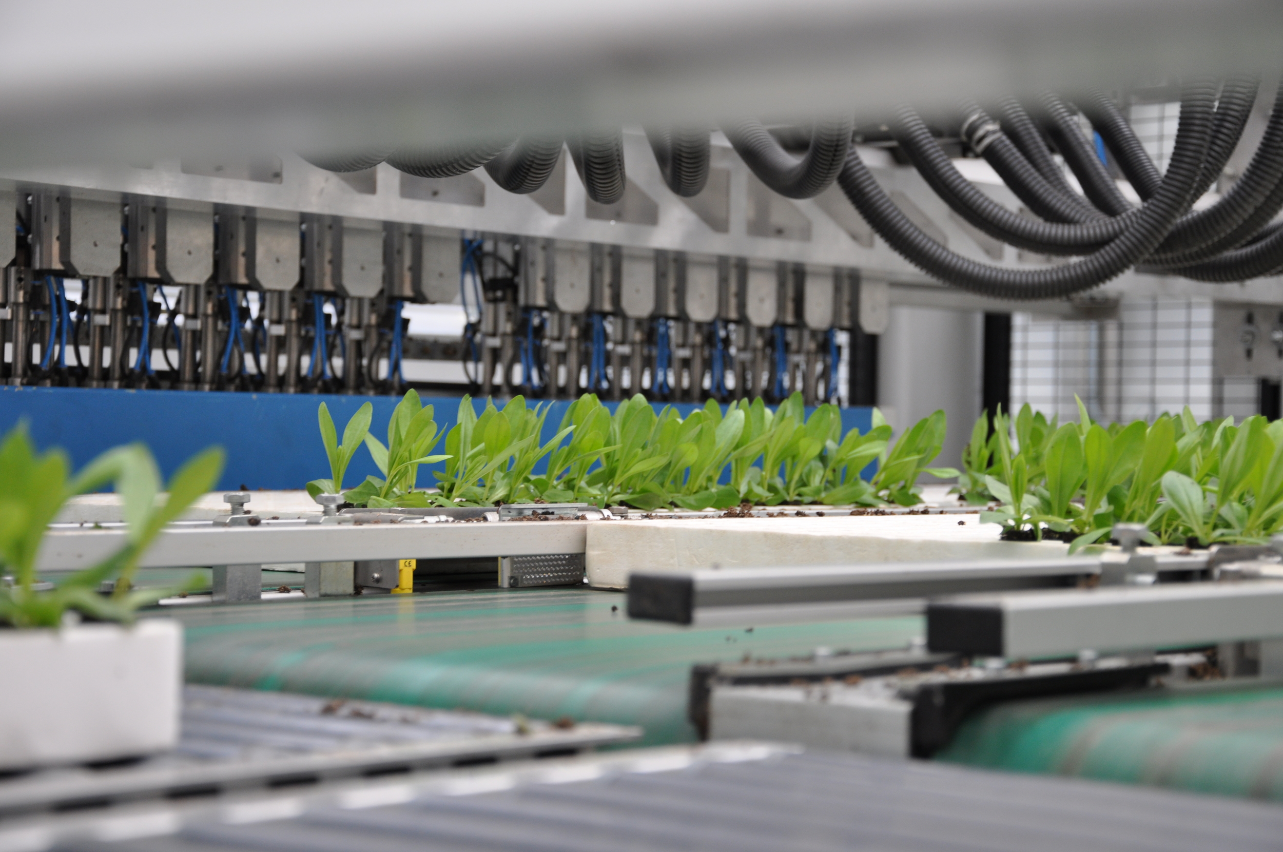 Plant seedlings being sorted by robot