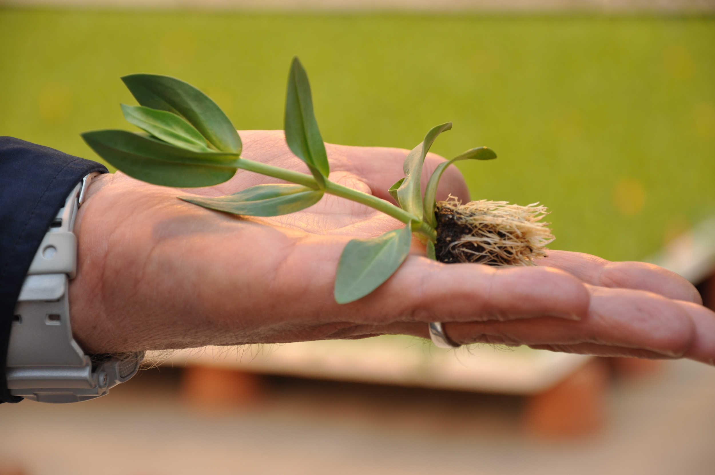 Man's hand holding plant seedling