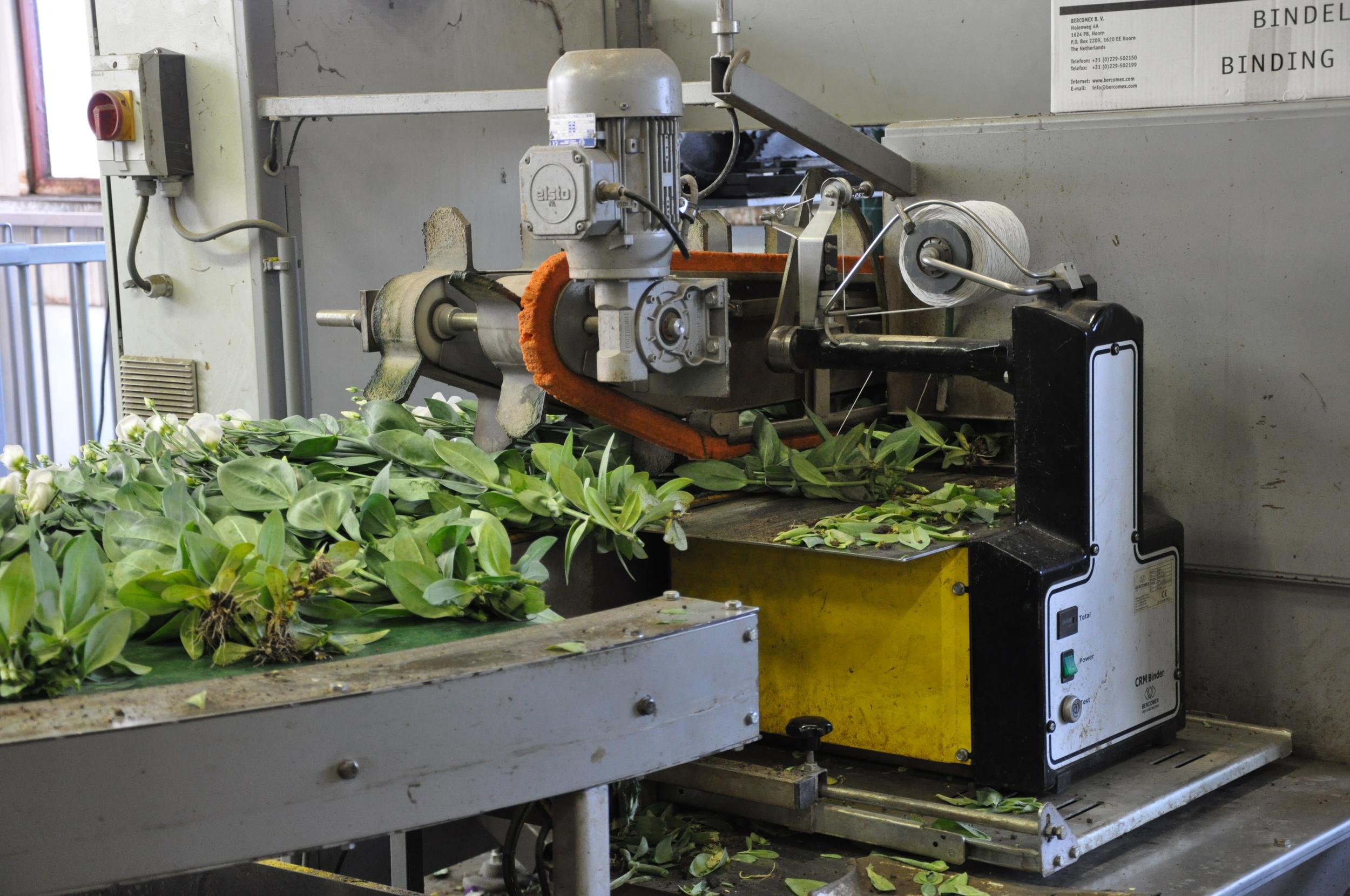 Flower stem binding machine
