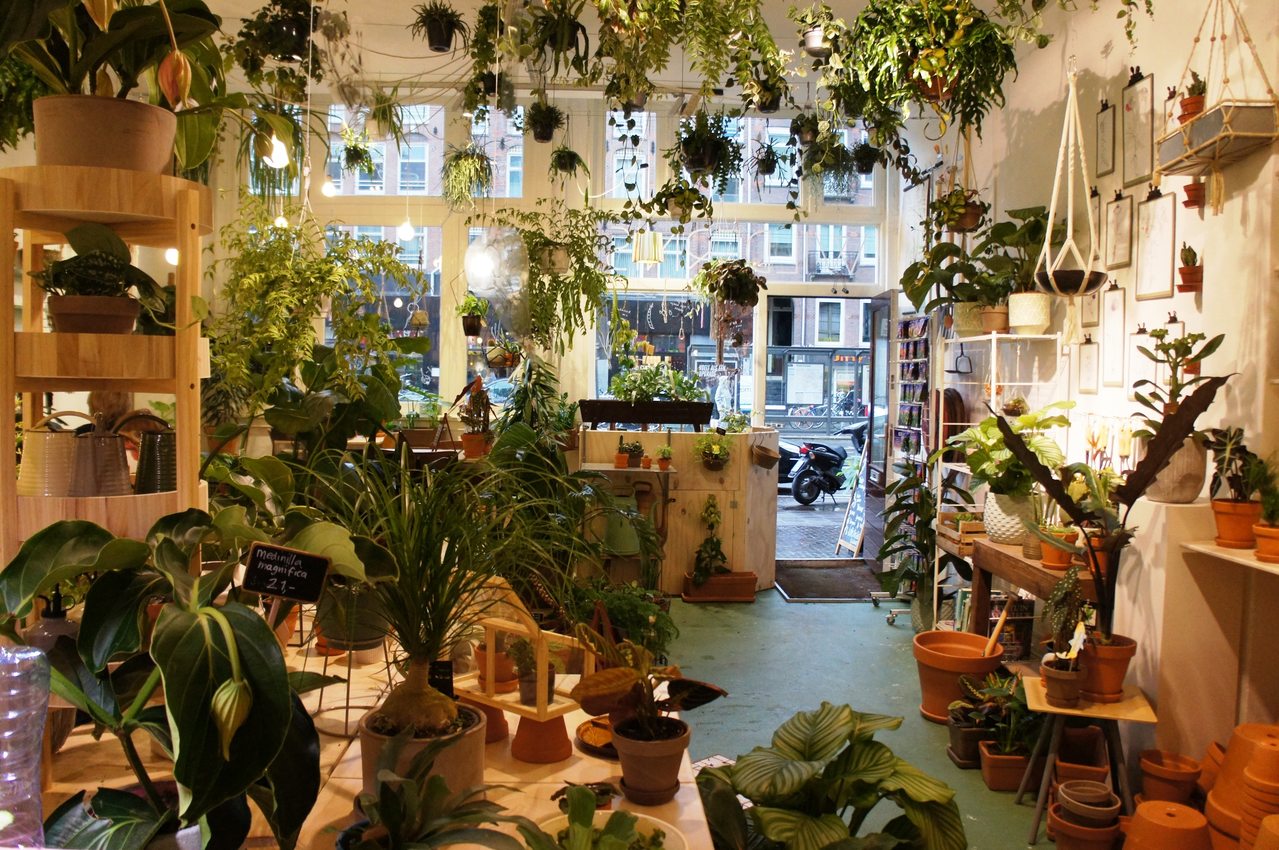 Wildernis plant shop interior Amsterdam