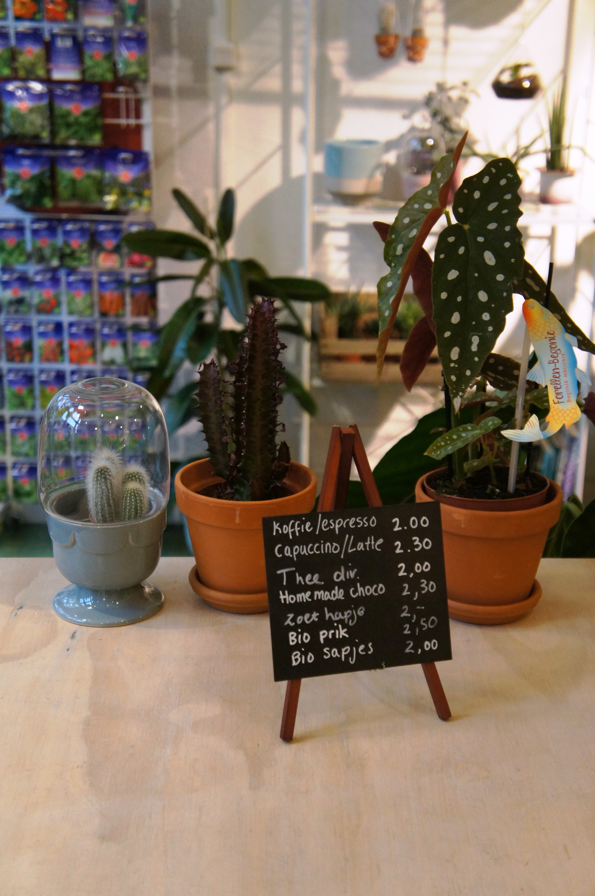 Cacti and houseplant on cafe table in Wildernis, Amsterdam
