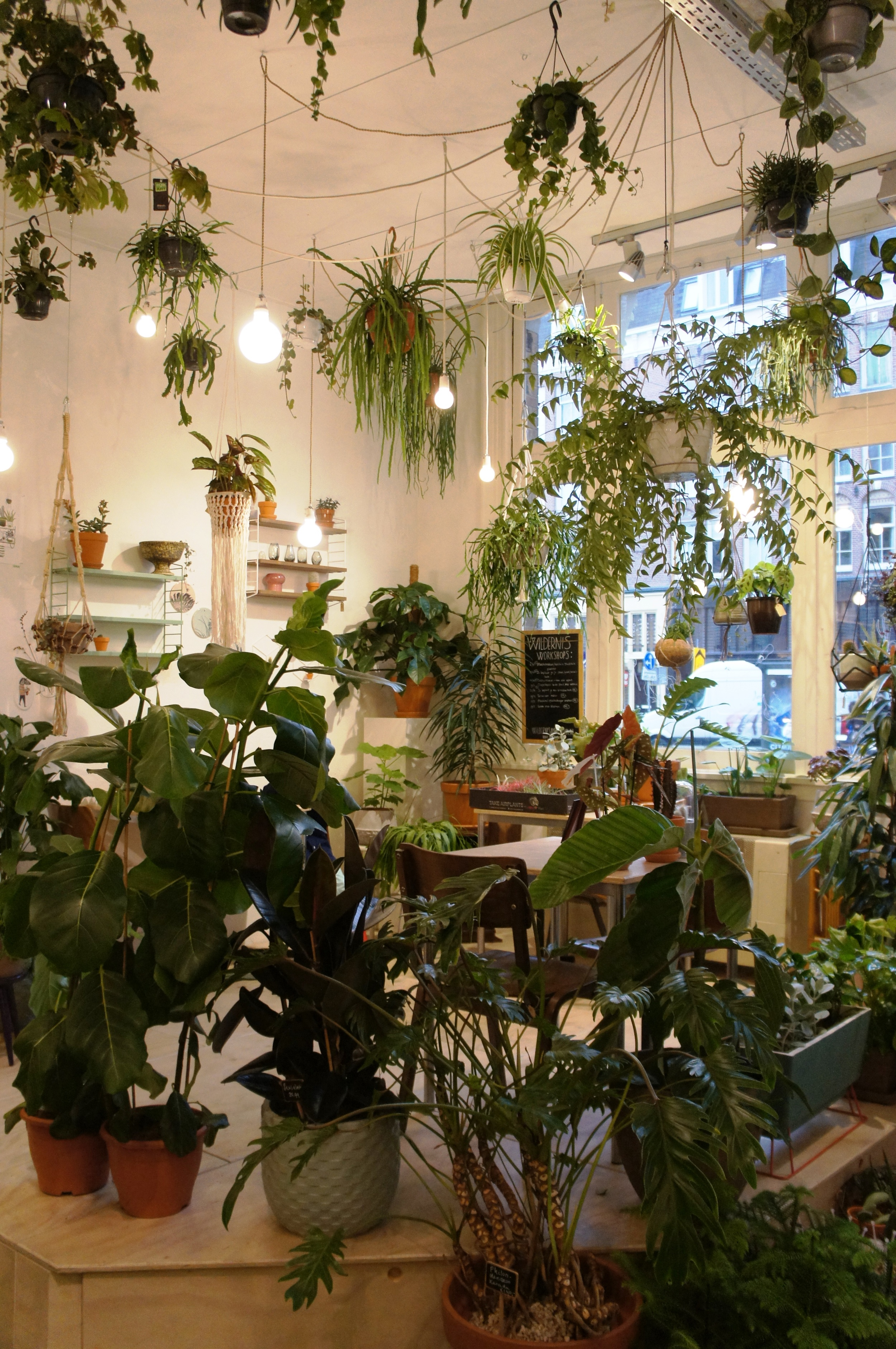 Interior of Wildernis plant shop in Amsterdam. Houseplants and cacti