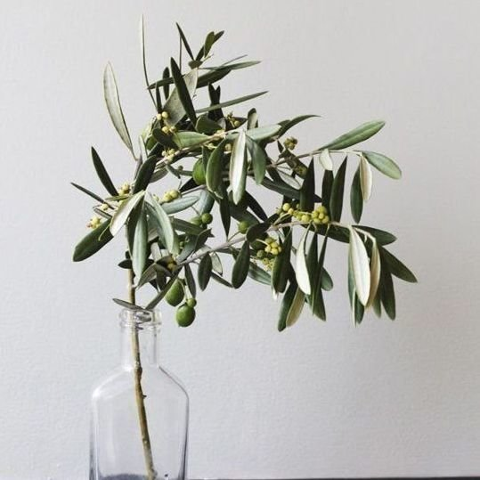 Modern Scandinavian style botanical arrangement in glass vase