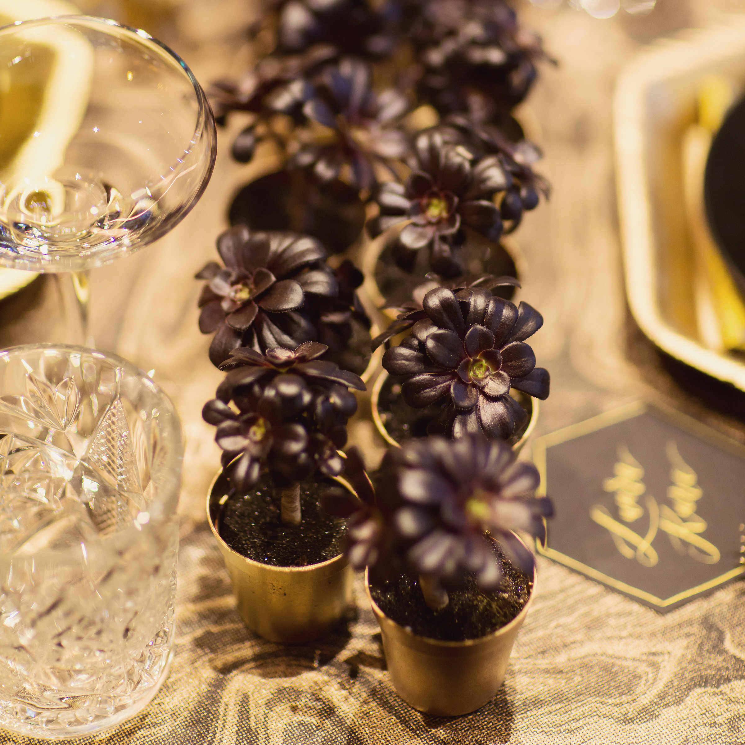 Black aeonium schwarzkopf in gold pots for dinner table centrepiece