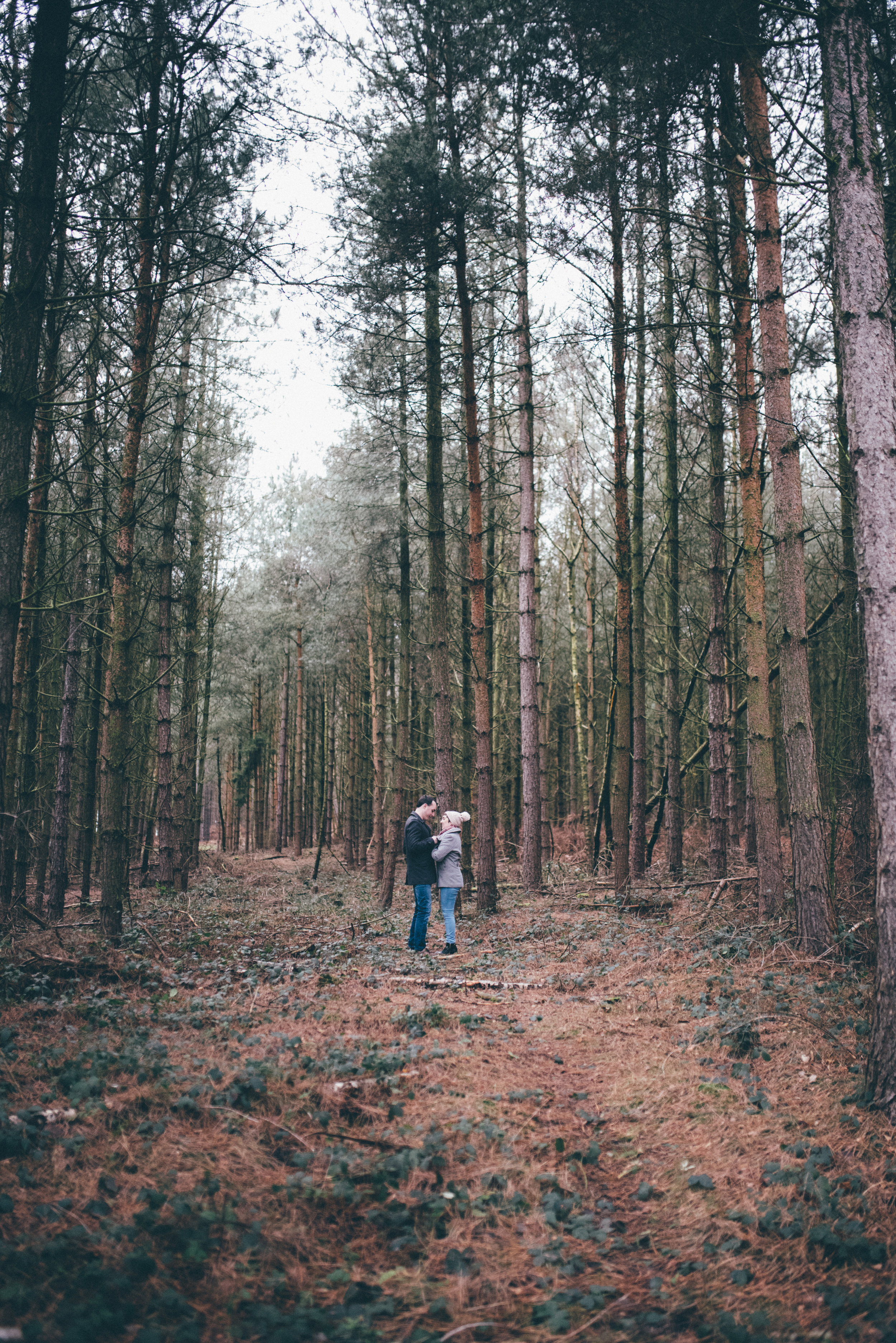 A autumn engagement shoot in the woods at Cannock Chase.