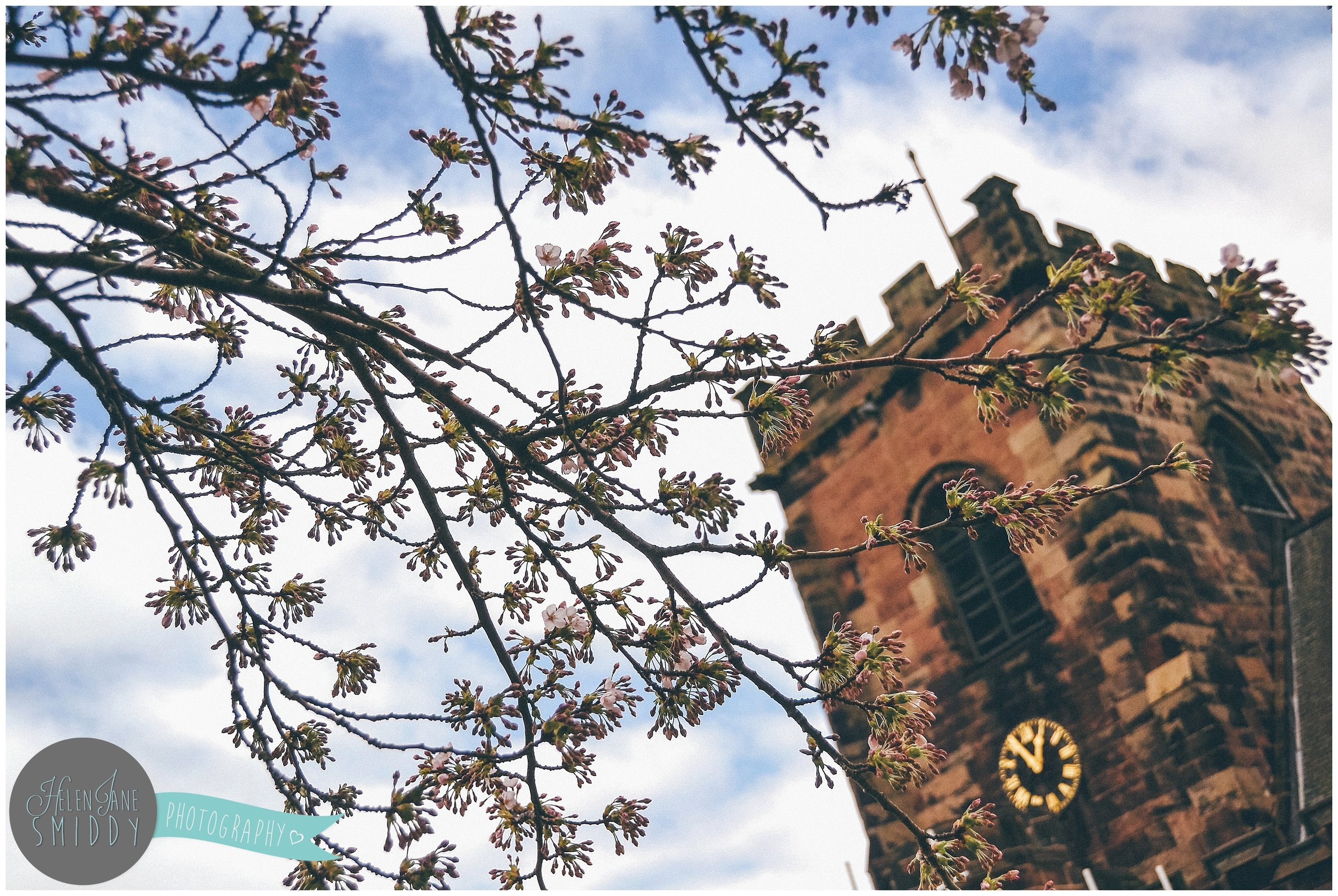 Blossom outside St Lawrence's church, Frodsham, Cheshire.