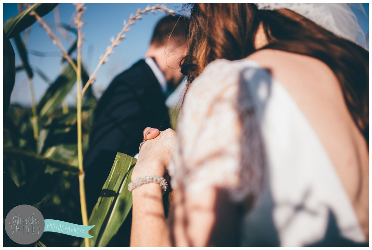 Newly married couple have their wedding photographs taken in a corn field in Norfolk.
