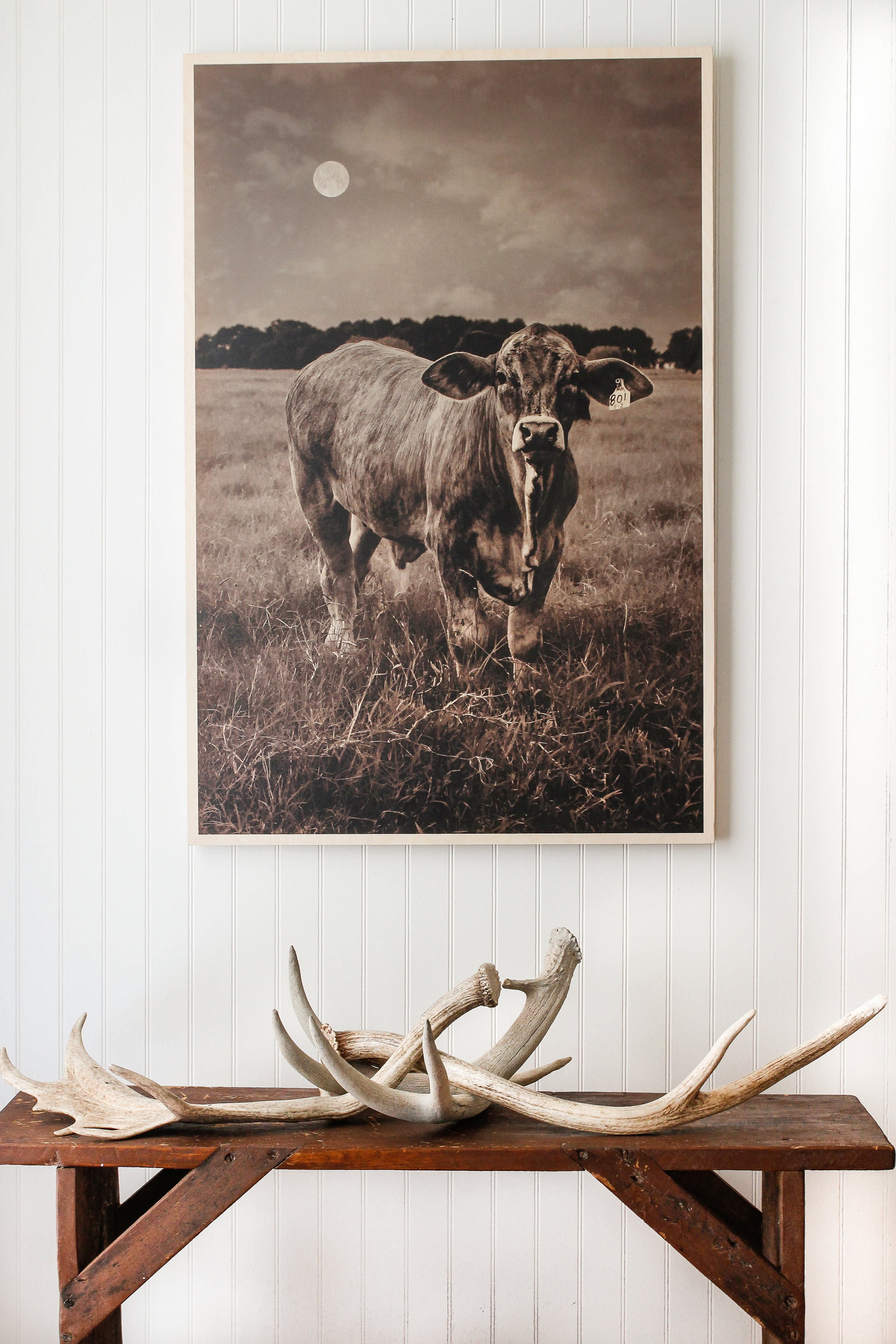 Cow Art Becki Griffin's Curious Details