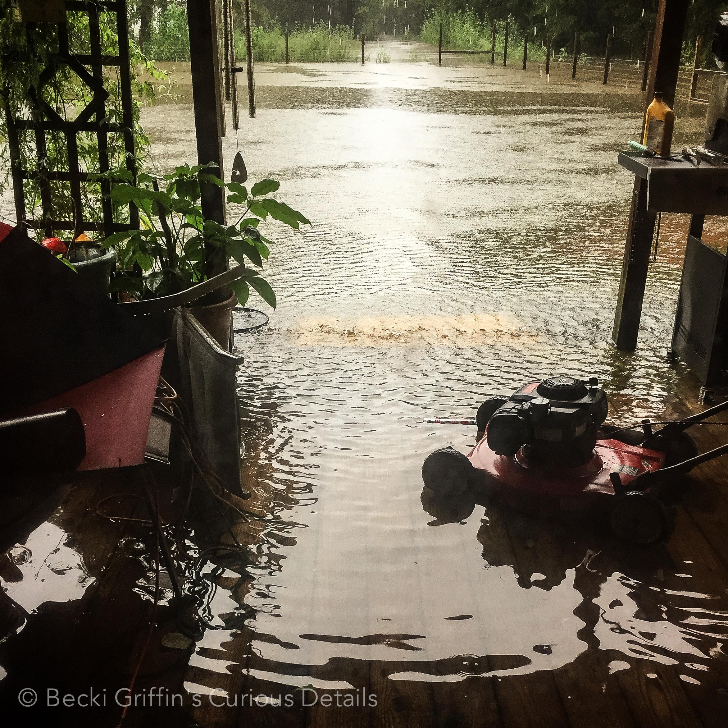 Becki Griffin's Curious Details Hurricane Harvey