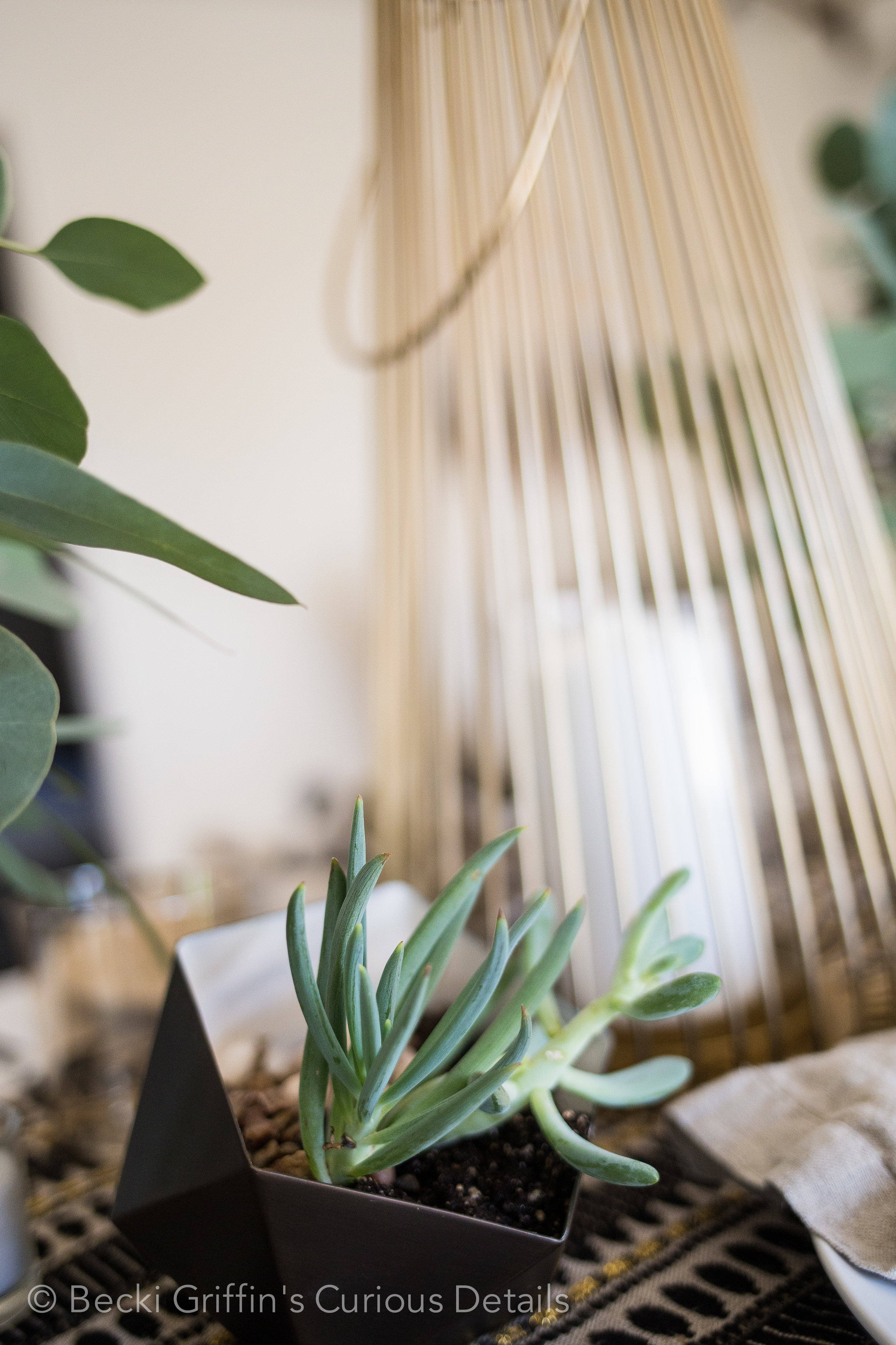 Becki Griffin's Curious Details|The Vintage Round Top