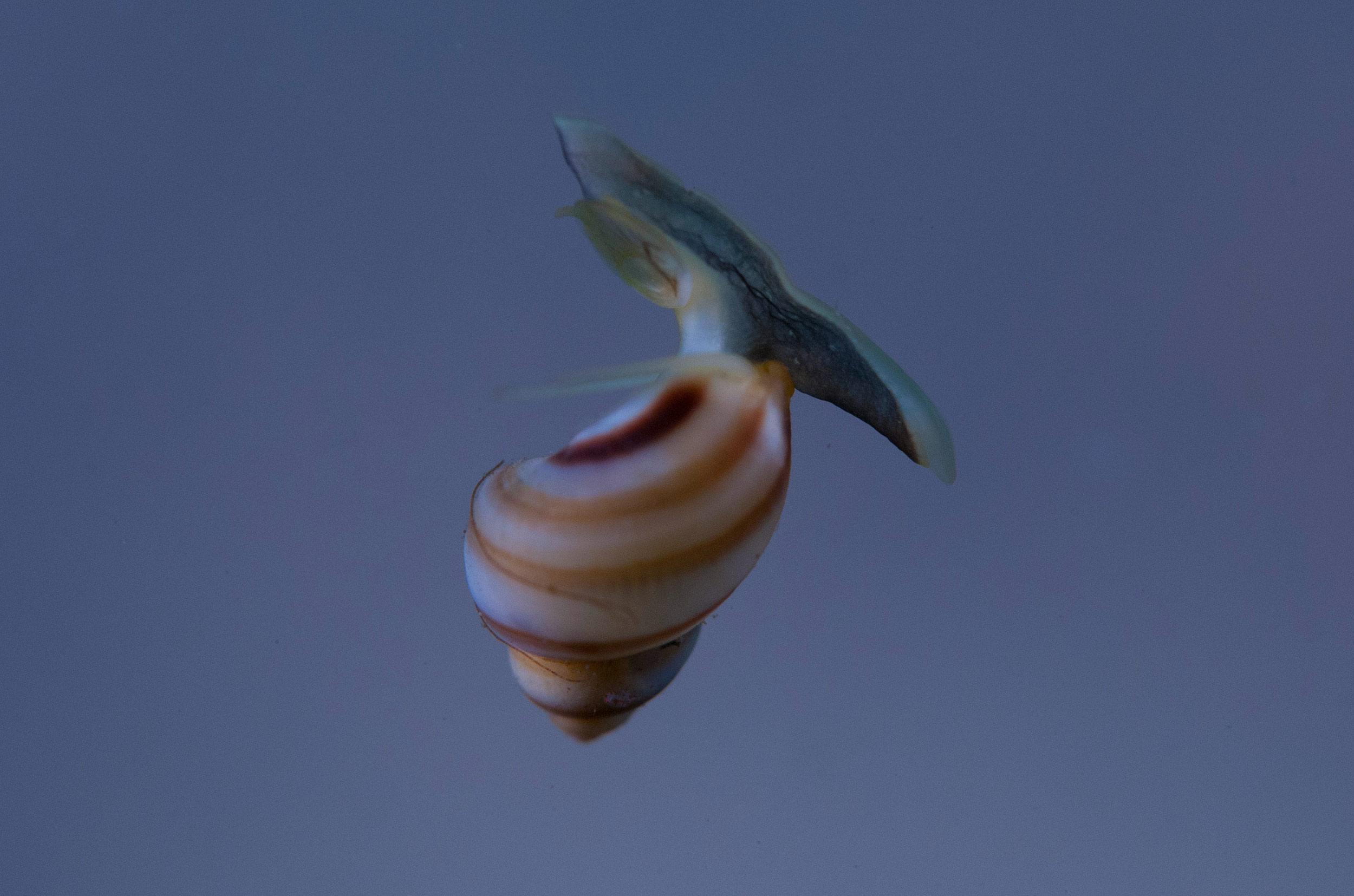 cedar-beach-dan-floating-snail.jpg