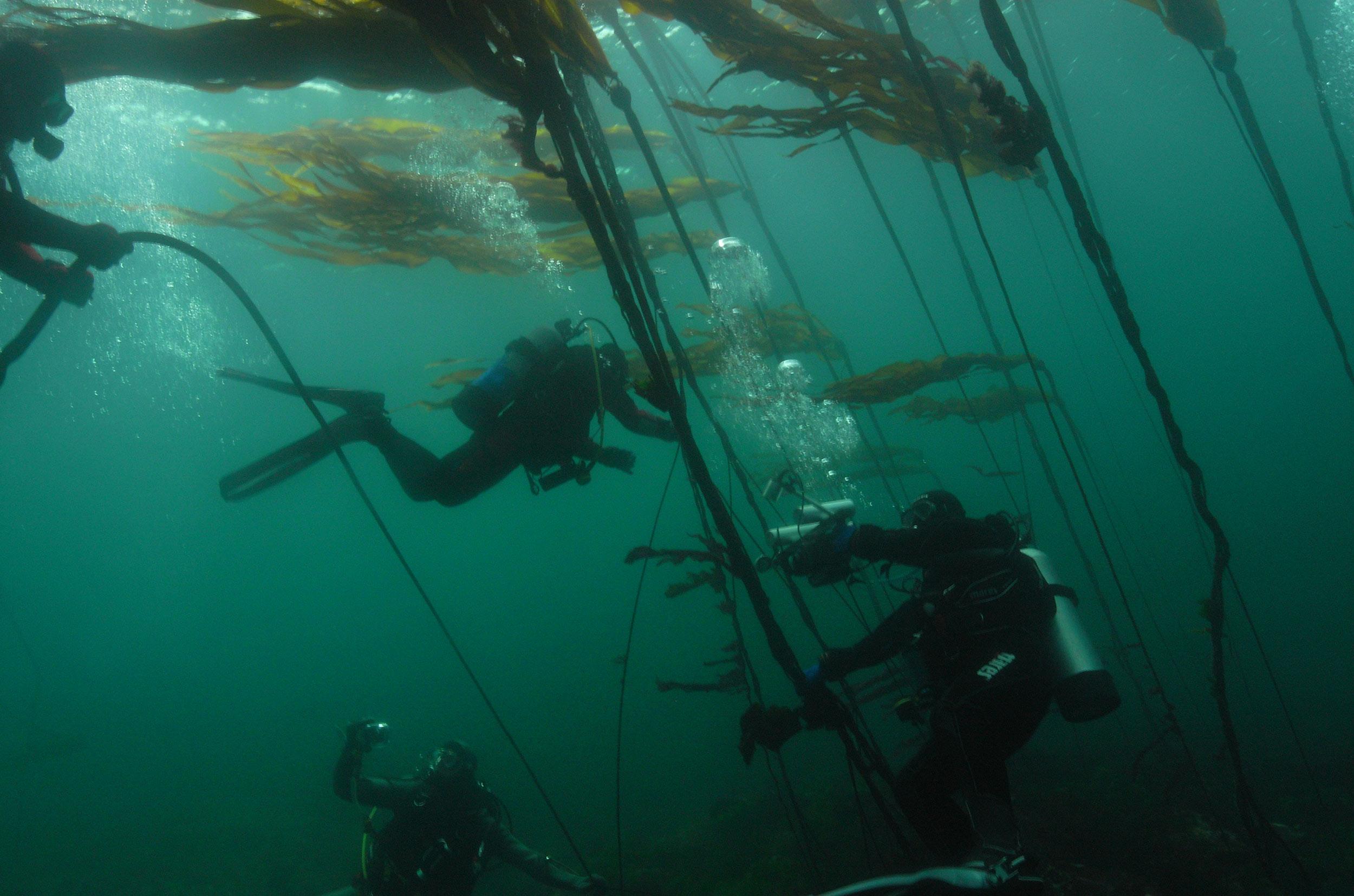 cedar-beach-divers.jpg