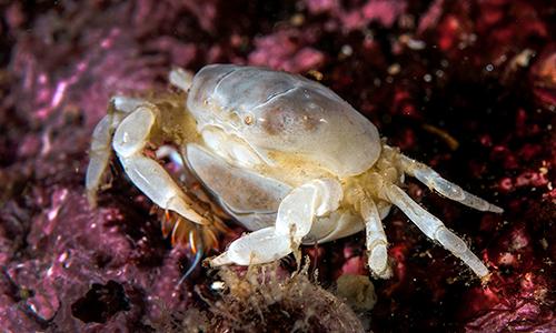 cedar-beach-crab.jpg