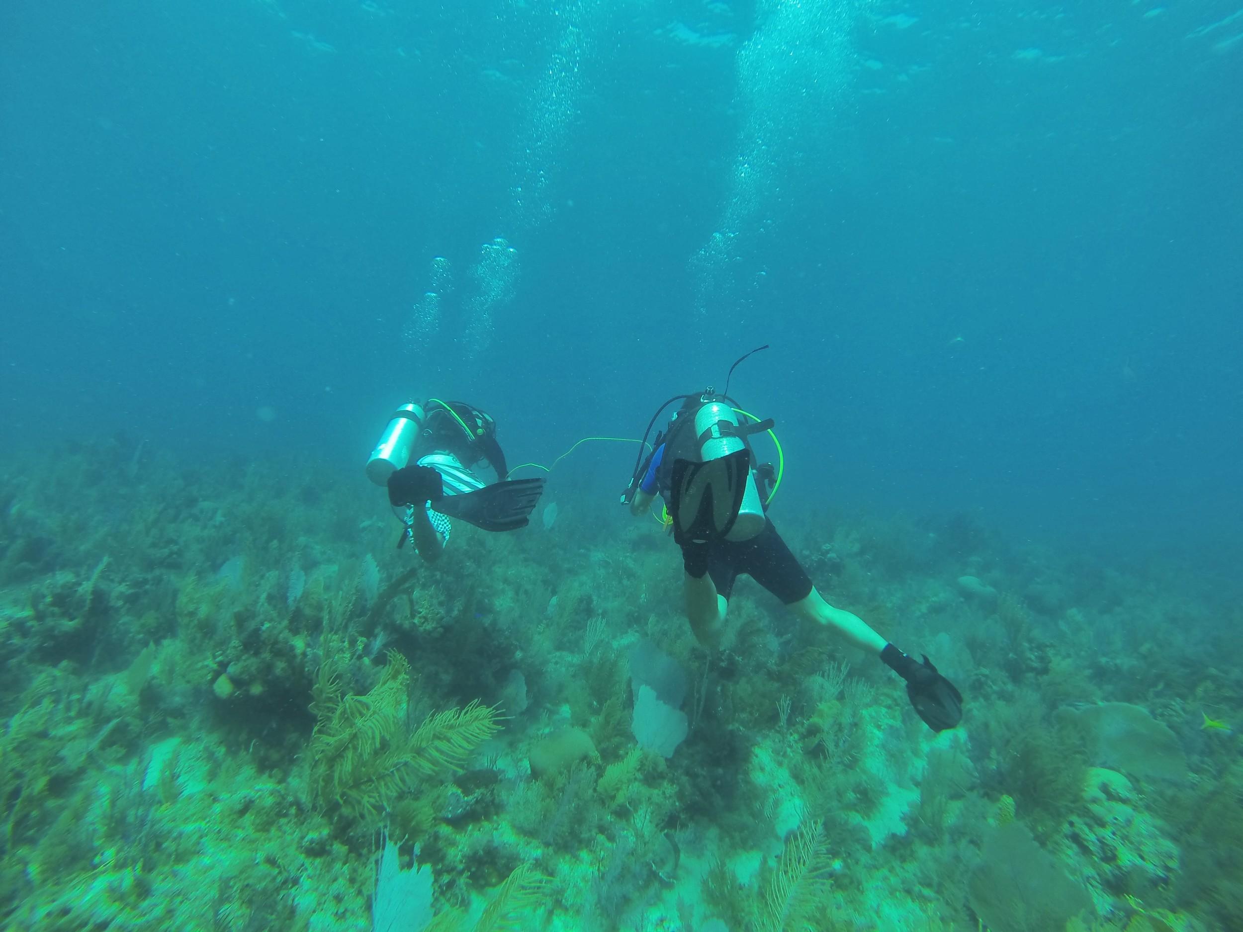 Swimming a transect, Jardines de la Reina, Cuba, 2013.