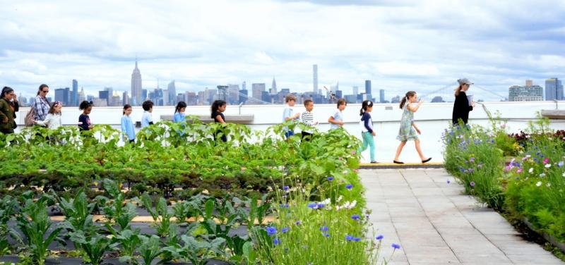City Growers educational visits to Brooklyn Grange Rooftop Farm.JPG