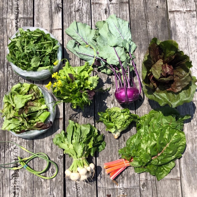 SIGN UP FOR A CSA SHARE -