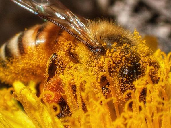Pollinator-Friendly